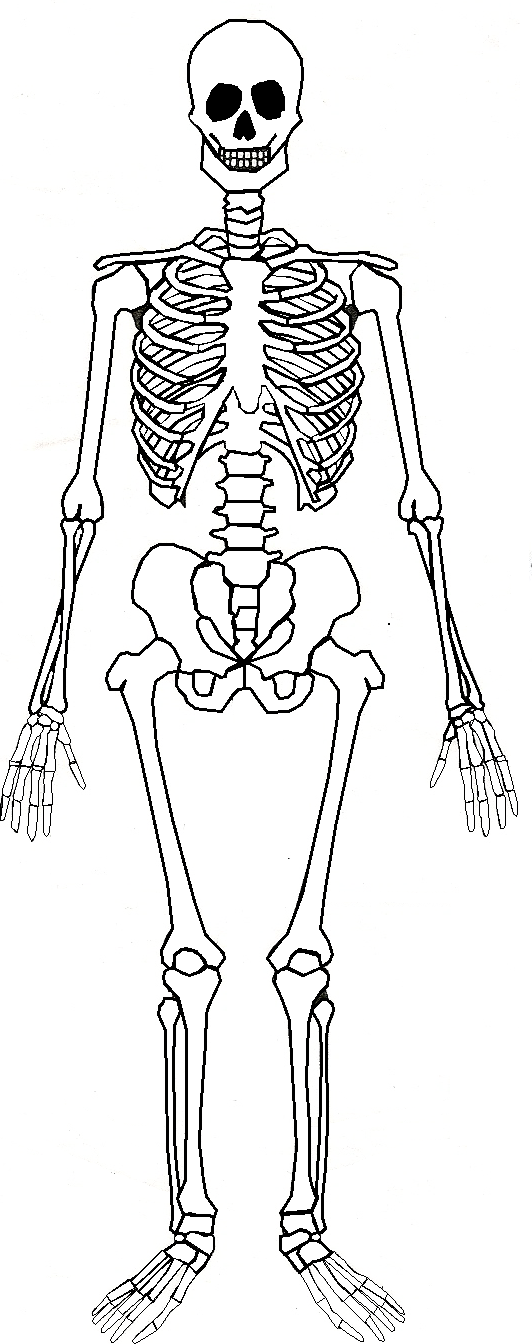 body planes diagram unlabeled bones body diagram unlabeled